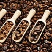 Çekirdek Kahveler (20)